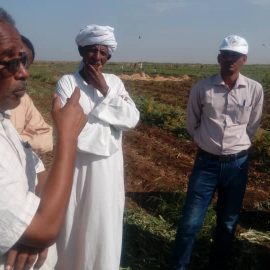 Crop protection Department Implements Field Day on the Safe Use of pesticides